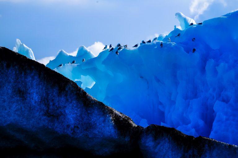image of penguins sitting on ice